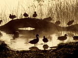 Ducks Along the Shore of Lake Banyoles Photographic Print by Tino Soriano