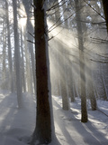 Snowy Forest in Morning Sun, Bavaria, Germany Reproduction photographique par Konrad Wothe