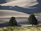 Growth at the Edge of the Dunes in Great Sand Dunes National Park Reproduction photographique par Scott S. Warren