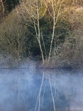 Trees Along a Lake Covered with Mist at Dawn Photographic Print by Nigel Hicks