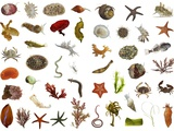 A Collage of Sea Life Found in California's Intertidal Zone Photographic Print by David Littschwager
