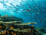 Schooling Fish over a Tropical Coral Reef Photographic Print by Mauricio Handler