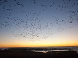 Dawn over the Atlantic Ocean Fotografisk tryk af Karen Kasmauski