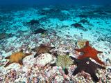 Starfish Off Darwin Island Photographic Print by Mauricio Handler