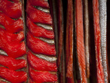 King Salmon Fish Fillets Hanging in Smokehouse on the Nushagak River Photographic Print by Michael Melford