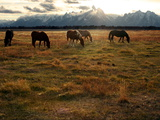 A Herd of Horses Grazing in a Field Photographic Print by Aaron Huey