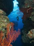A Scuba Diver Explores a Coral Ledge Photographic Print by Mauricio Handler
