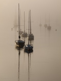 Sailboats on their Harbor Moorings, in Early Morning Fog Fotografisk tryk af Nigel Hicks