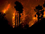 The Yorba Linda-Corona Fire Rages Behind Palm Trees in Carbon Canyon Photographic Print by Aaron Huey