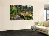 Several Bothriolepis Emerge from a Shallow Tributary onto Dry Land Wall Mural by  Stocktrek Images
