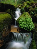 Cascading Stream in Great Smoky Mountains Reproduction photographique par Ron Watts