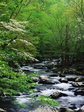 Stream in Lush Forest Reproduction photographique par Ron Watts