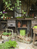 Potting Shed in Garden at Hampton Court Flower Show Photographic Print by Mark Bolton
