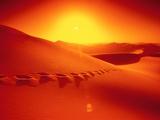 Footprints in desert Fotografisk tryk af Frank Krahmer