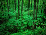 Forest in Great Smoky Mountains Photographic Print by Cody Wood