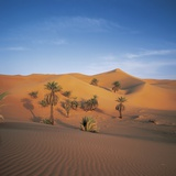 Palm Trees and Sand Dunes Photographic Print by José Fuste Raga