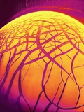 Dryed Drop of Blood Fotografie-Druck von  Micro Discovery