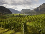 Landscape of Winery Photographic Print by Benjamin Rondel