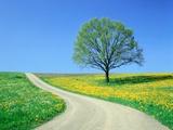 Country road and tree, spring Fotografisk trykk av Herbert Kehrer