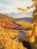Vineyards in autumn in Esslingen/Neckar Photographic Print by Herbert Kehrer