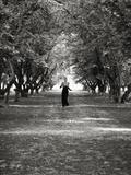 Woman Running on Tree Lined Lane Fotografisk tryk af Elisa Lazo De Valdez