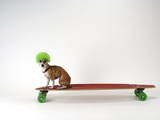 Chihuahua on a Skateboard Fotografisk trykk av Chris Rogers