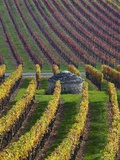 Vineyards in Fall in the Hautes-Cotes of Burgundy Fotografisk tryk af Hans Strand