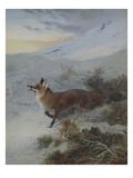 A Fox in a Winter Landscape Giclée-Druck von Archibald Thorburn