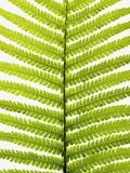 Fern Leaf Fotografie-Druck von Frank Krahmer