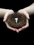 Birds Nest in Cupped Hands Fotografisk tryk af Elisa Lazo De Valdez