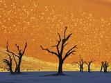 Dead Trees in Dead Vlei Fotografisk tryk af Frank Krahmer