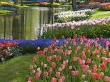 Tulipes de printemps au bord d'une rivière Reproduction photographique par Mark Bolton