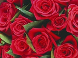Bouquet of Red Roses Fotografisk trykk av Clive Nichols