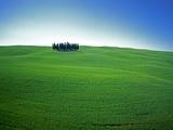 Coppice of Trees on Green Fields in Tuscany Fotografie-Druck von José Fuste Raga