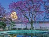 Himeji Castle Behind Blooming Cherry Trees at Twilight Fotografisk trykk av Rudy Sulgan