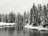 Fresh, Heavy, Wet Snow on Trees Along Banks of Junction Creek, Lively, Ontario, Canada. Lámina fotográfica por Don Johnston