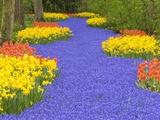 Flowers at Keukenhof Garden Photographic Print by Jim Zuckerman