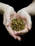 Handful of Pumpkin Seeds Fotografisk tryk af Elisa Lazo De Valdez
