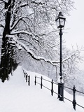 Trees and lamp post in snow Photographic Print by Bruno Ehrs
