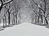 Central Park in de winter, New York Fotoprint van Rudy Sulgan