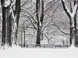 Central Park en hiver, New York Reproduction photographique par Rudy Sulgan