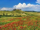 Farmhouse with Cypresses and Poppies Premium fotografisk trykk av Frank Krahmer