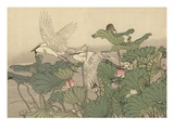 Egrets and Lotus Giclee Print by Imao Keinen