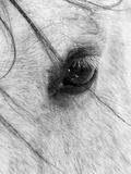 A Close Shot of a Horses Eye with Snow Flakes Taken in Alberta, Canada. Fotografie-Druck von Wayne Simpson