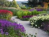 Path in Trentham Gardens Trykk på strukket lerret av Clive Nichols