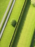 Hedge in The Hamptons Reproduction photographique par Cameron Davidson