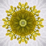Kaleidoscope of Clematis flower Photographic Print by Charles Krebs