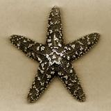 Sugar Starfish Photographic Print by John Kuss