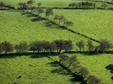 Rich green pastureland in countryside of Northern Ireland Photographic Print by Layne Kennedy