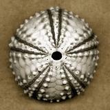 Deep Water Sea Urchin Fotografie-Druck von John Kuss